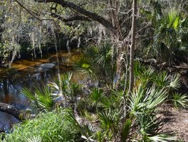 Little Manatee River Trail