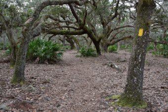 North Loop and Gobbler Ridge Trails