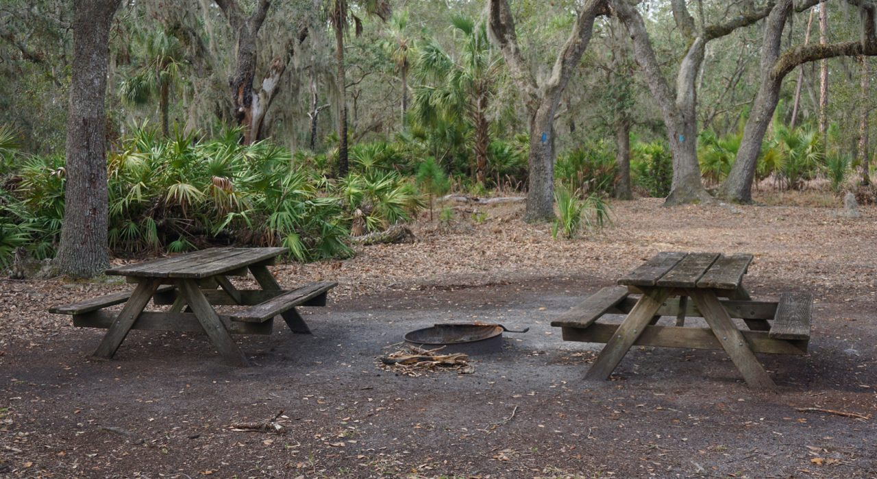 Fallen Oak Campsite