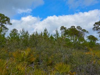 High Bluff Coastal Trail