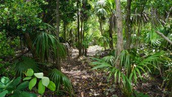Curry Hammock Trail