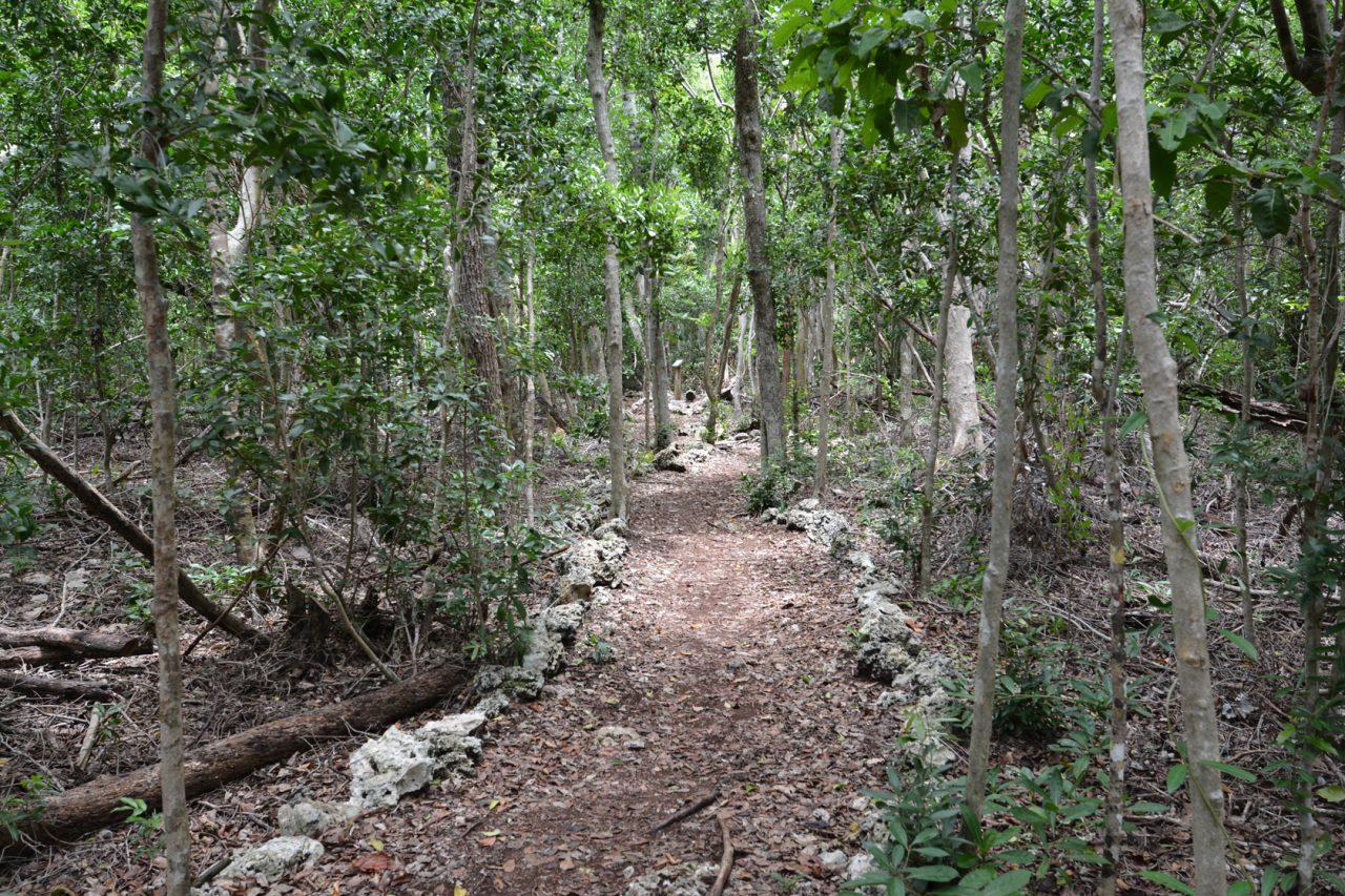 Wild Tamarind Trail at John Pennekamp Coral Reef State Park