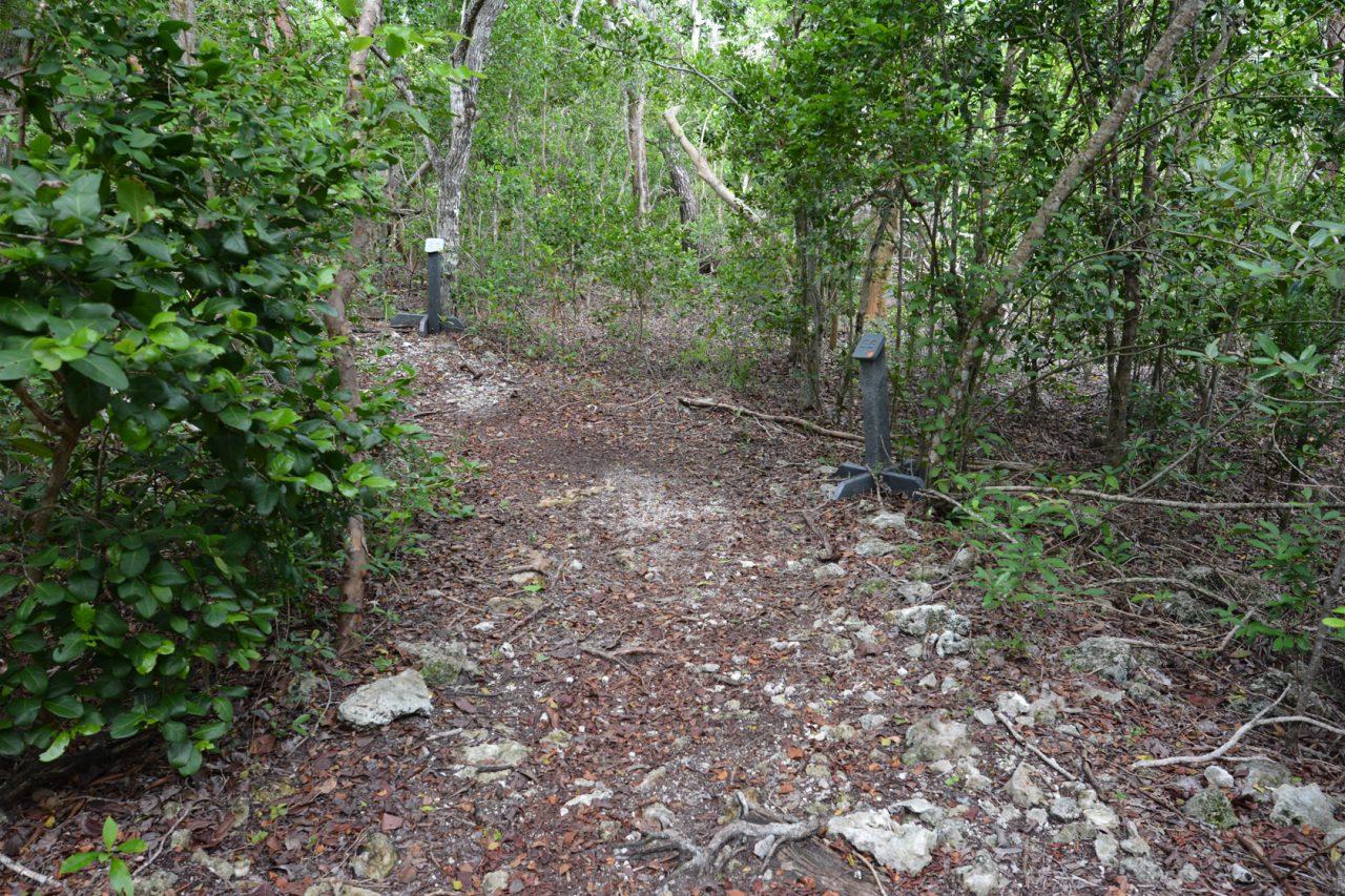 Windley Key Hammock Trail