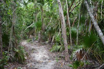 Hammock Trail Windley Key