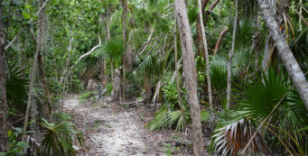 Hammock Trail Windley Key