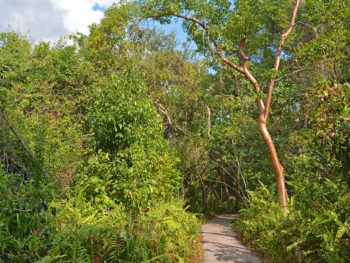 Gumbo Limbo Trail Everglades National Park