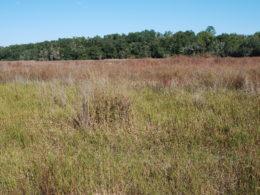 A marshy area on Ross Prairie