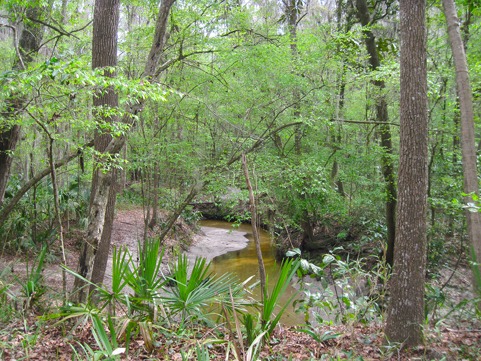 Hogtown Creek at Alfred Ring Park