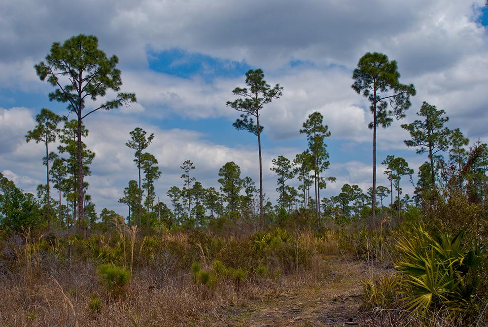 Babcock Ecotour Trail