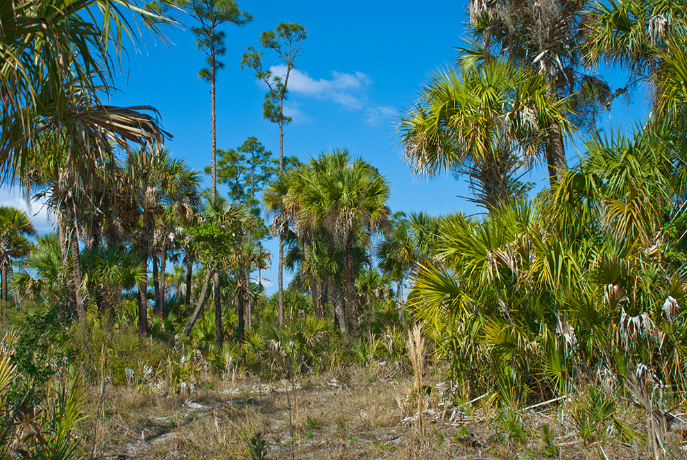 http://www.flickr.com/photos/floridahikes/sets/72157625510239616