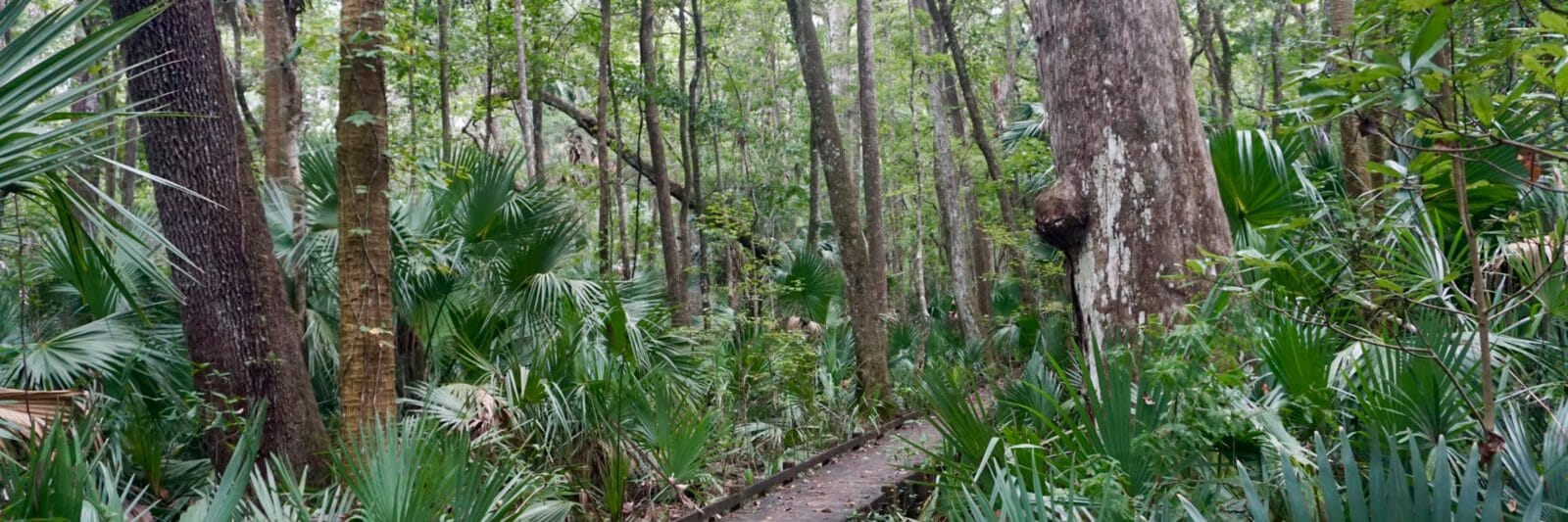 Big cypress Bear Swamp Trail