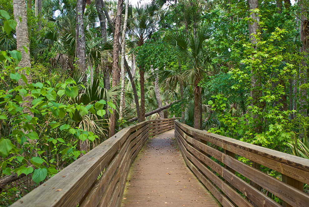 black hammock wilderness area hiking near orlando   florida hikes   rh   floridahikes