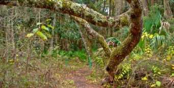Bluffton Nature Trail