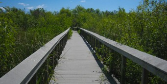 Bobcat Boardwalk