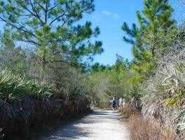 Bridge to the Future: The Marjorie Harris Carr Cross-Florida Greenway