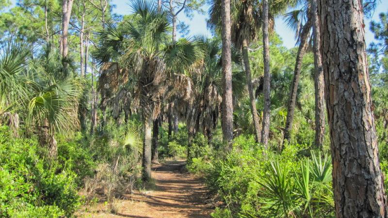 Caladesi Island Trail