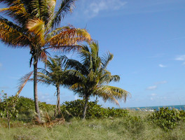 Cape Florida Nature Trail