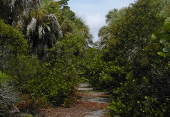 Cayo Costa Hiking Trails