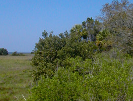 Cedar Key Museum Nature Trail