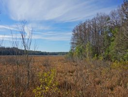 Chinsegut Conservation Center Tract