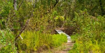 Christian Point Trail