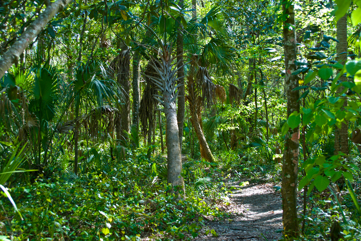 Churchhouse Hammock Trail Florida Hikes