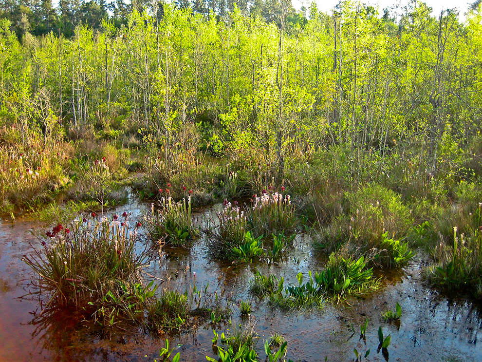 Clear Creek Nature Trail