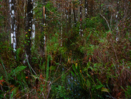 Collier Seminole Hiking Trail