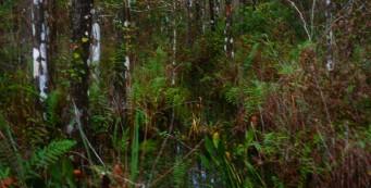 Collier Seminole Hiking Trail