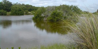 Ding Darling Bailey Tract