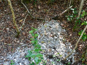 Calusa Shell Mound