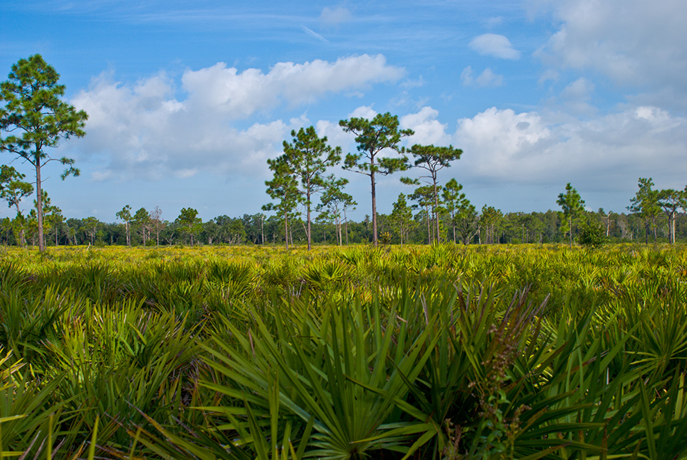 Disney Wilderness Preserve
