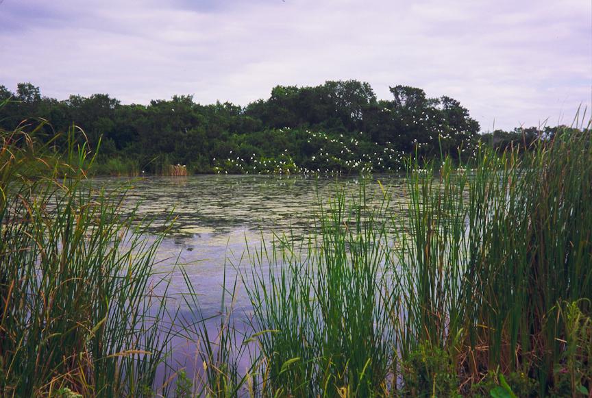 Eco Pond
