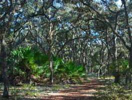 Econlockhatchee Sandhills Conservation Area