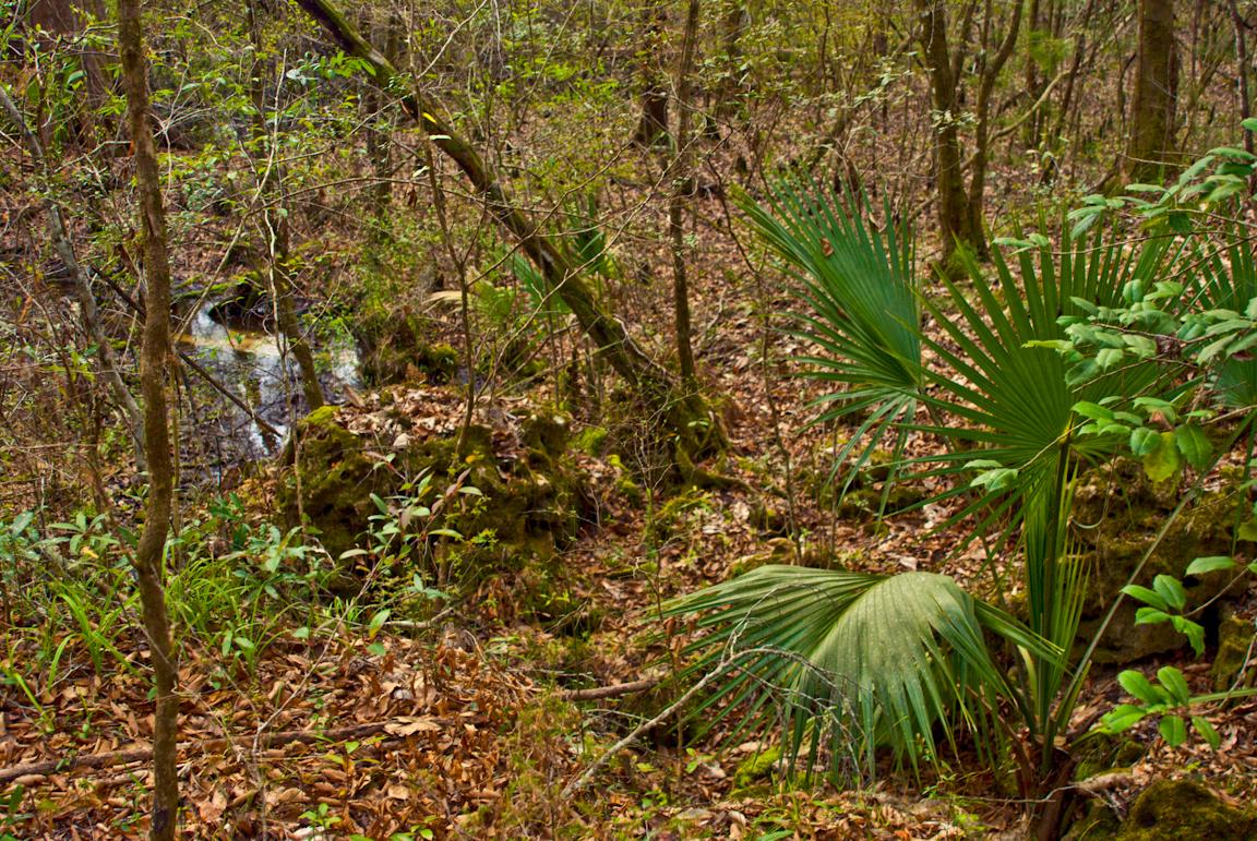 Econfina Nature Trail