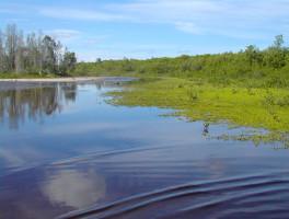 Estero Scrub Preserve State Park