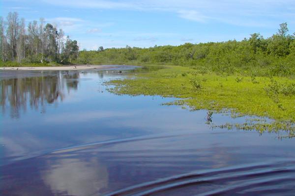 Estero Scrub Preserve