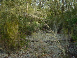 Florida Trail, Alexander Springs to Farles Lake