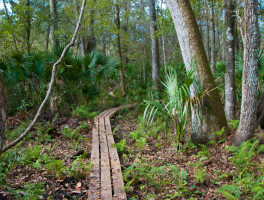 Florida Trail, Bronson State Forest