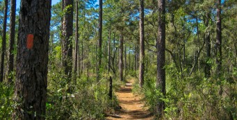 Florida Trail near Clearwater Lake