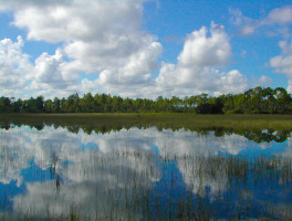 Florida Trail, Ocean to Lake: Corbett WMA