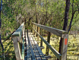 Florida Trail, Eglin East