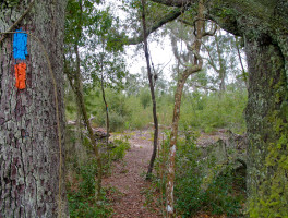 Florida Trail, Etoniah West