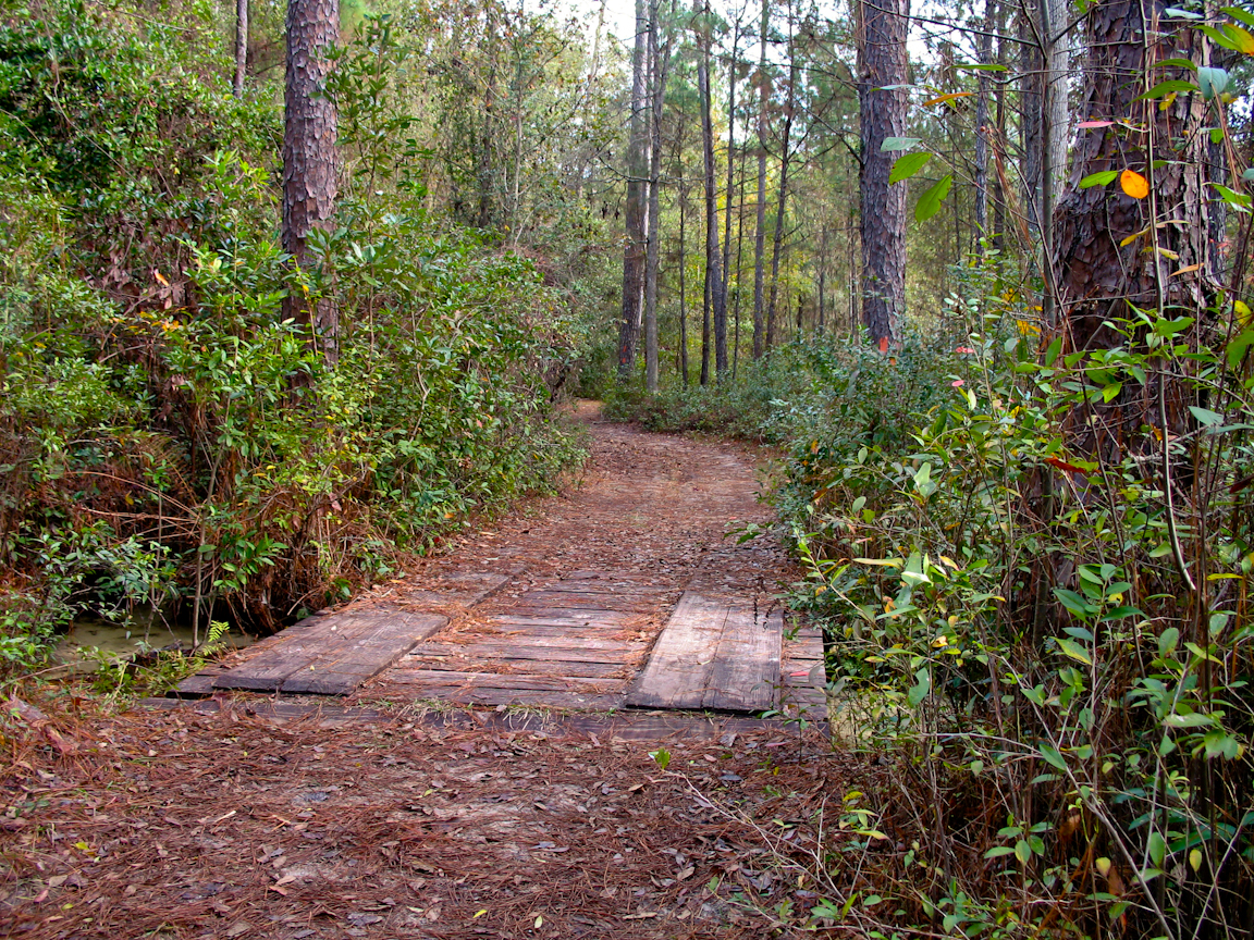 Florida Trail, Gold Head Branch State Park