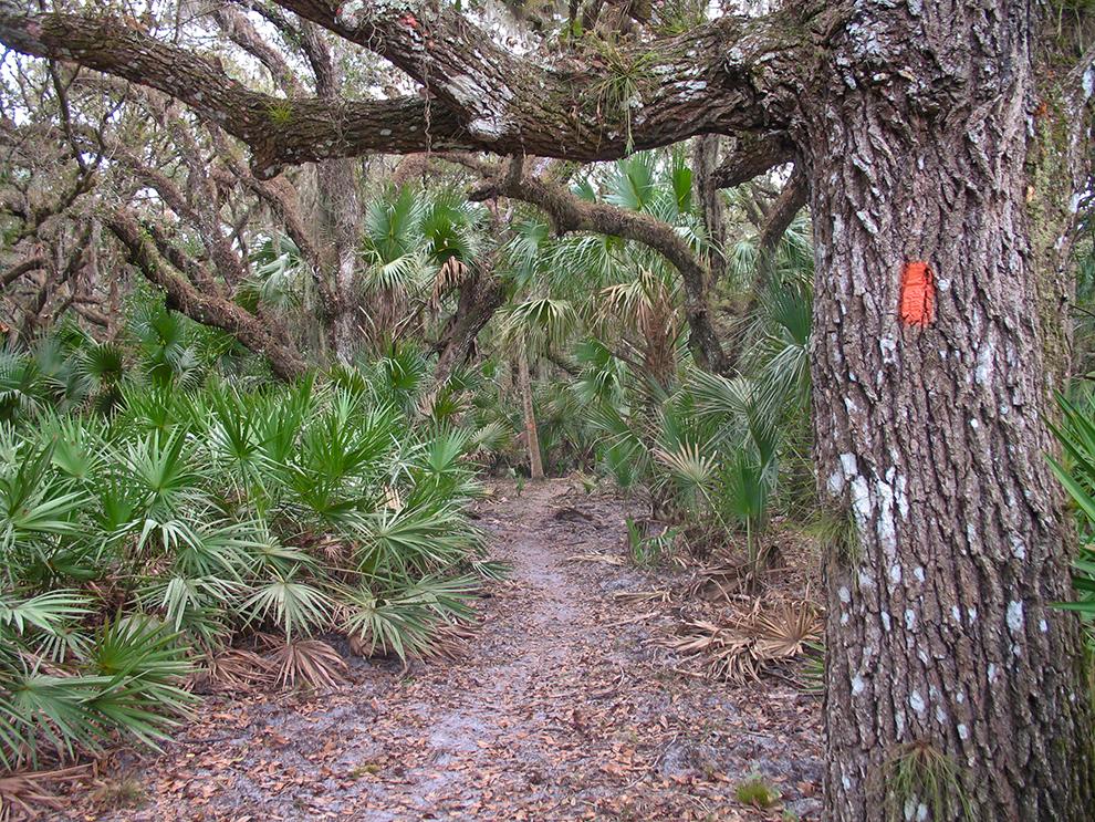 Hickory Hammock Trail