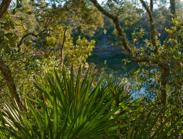 Florida Trail, Hopkins Prairie to Juniper Springs