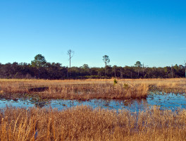 Florida Trail, Hopkins Prairie to Salt Springs