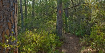 Florida Trail north of Farles Prairie