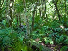 Florida Trail, Mills Creek