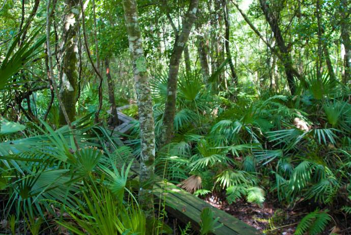 Florida Trail, Mills Creek Woodlands